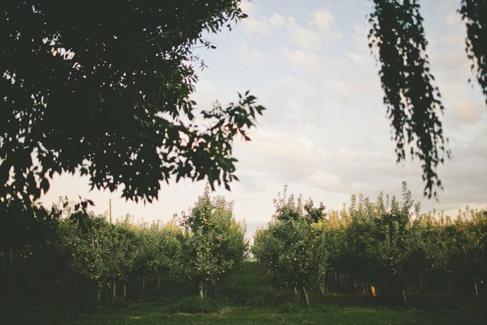 27_grandview_central_washington_country_farm_engagement